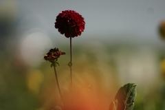 van Gogh bokeh Canon FD 200mm f2.8 DSC09296 (1)