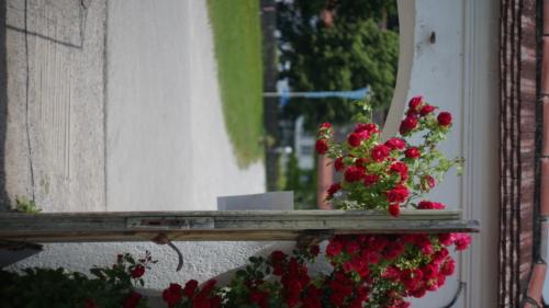 Carl Zeiss Jena Biotar 58mm f2 A7 05347