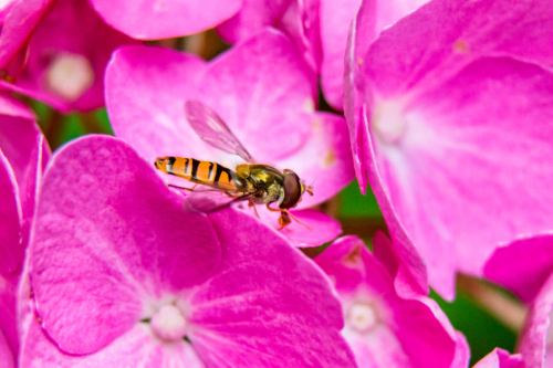 Macro photo with extension tube and Nikon lens - click on photo to enlarge